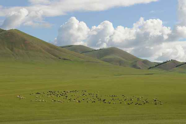 Poster Mongolei Weite Steppe Download