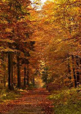 Poster Wald Weg Herbst Fall Leaves Mood Natur Download