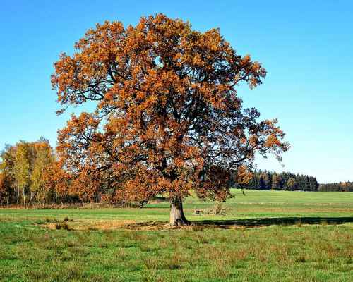 Poster Baum Individually Herbst Leaves Himmel Mood Colours Download