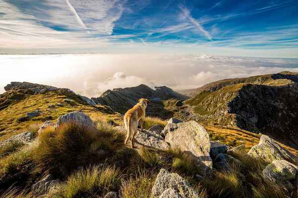 Poster Hund Berg Mombarone Wolken Andrate Download