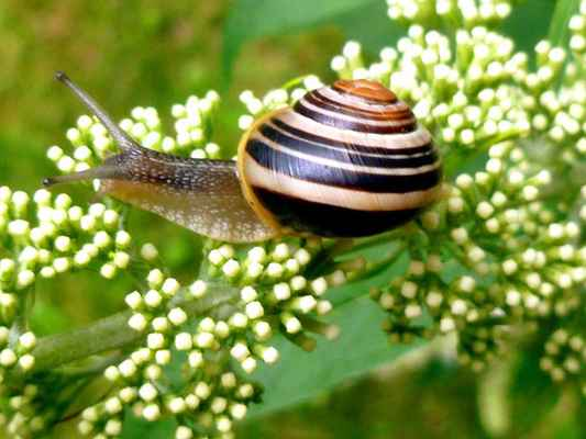 Poster Snail Garten Shell Probe Mollusk Slowly Natur Download