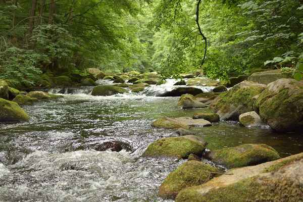 Poster Bode Fluss Wasser Stones Idyllic Mood Wald Download