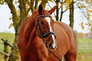 Poster Tiere Pferd Tier Ride Reiterhof Brown Coupling