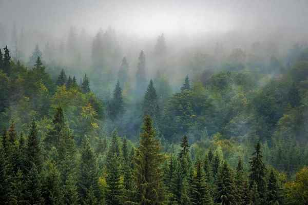 Poster Natur Wald Nebel Misty Download